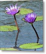 Wood Enhanced Water Lilies Metal Print