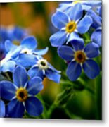 Wood Forget Me Not Blue Bunch Metal Print