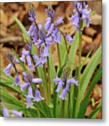 Wood Hyacinth Blue Metal Print
