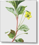 Wood Loosestrife Metal Print