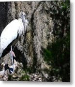 Wood Stork And Moss Metal Print
