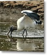 Wood Stork Fishing Metal Print
