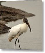 Wood Stork Walking Metal Print