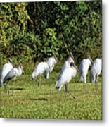 Wood Storks 2 - There Is Always One In A Crowd Metal Print