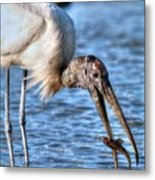 Wood Storks Breakfast Lunch And Dinner Metal Print