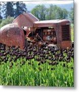 Woodburn Oregon - Tractor And Field Of Tulips Metal Print