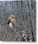 Woodcock Flight Ascension Metal Print