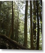 Wooded Serenity Metal Print