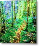 Wooded Trail Metal Print