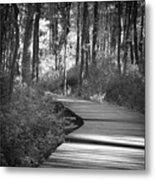 Wooded Walk Metal Print