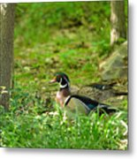 Woodies Feeding Metal Print
