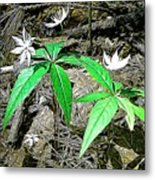 Woodland Flowers Metal Print
