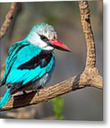 Woodland Kingfisher Halcyon Metal Print