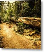 Woodland Nature Walk Metal Print