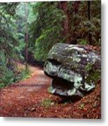 Woodland Path Naugatuck State Forest Metal Print