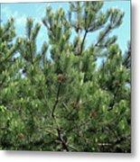 Woodland Pines Metal Print