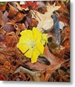 Woodland Surprise Metal Print
