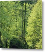 Woodland View With Stream, Sachsische Metal Print