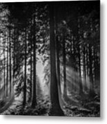 Woodland Walks Silver Rays B/w Metal Print