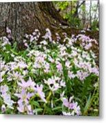 Woodlands Spring Beauty Metal Print