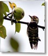 Woodpecker. Dendrocopos Minor Metal Print
