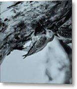 Woodpecker - El Salvador Metal Print