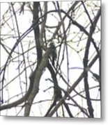 Woodpecker In The Forest Metal Print