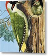 Woodpecker Metal Print by RB Davis