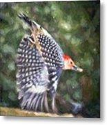 Woodpecker Wings Metal Print
