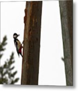 Woodpecker Workshop  Metal Print