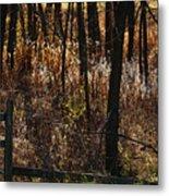 Woods - 2 Metal Print by Linda Shafer