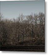 Woods Among The Trees Metal Print