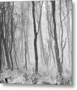 Woods In Mist, Stagshaw Common Metal Print