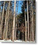 Woods In Winter Metal Print