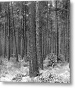 Woods In Winter, Slaley Metal Print