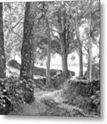 Woods, Troutbeck, Windermere Metal Print