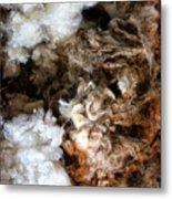 Woolshed Wool Metal Print