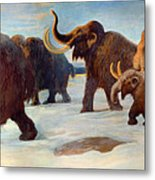Wooly Mammoths Near The Somme River Metal Print