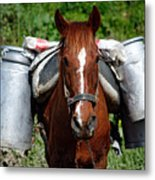Work Horse At The Azores Metal Print