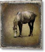 Working Horse Metal Print