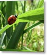 World Of Ladybug 2 Metal Print