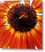 Worm And His Sunflower Metal Print