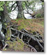 Woven Roots Metal Print