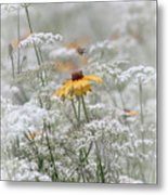Wrapped In Queen Anne's Lace Metal Print