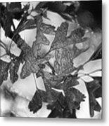 Wrapped Leaves Metal Print