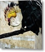 Wreathed Hornbill Perching Against Vintage Concrete Wall Backgro Metal Print