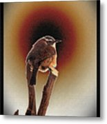 Wren At Sundown Metal Print by Sue Melvin