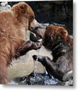 Wrestling Grizzly Bears In A Shallow River Metal Print