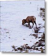Wyoming Big Horn Metal Print