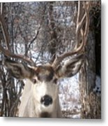 Wyoming Buck Metal Print